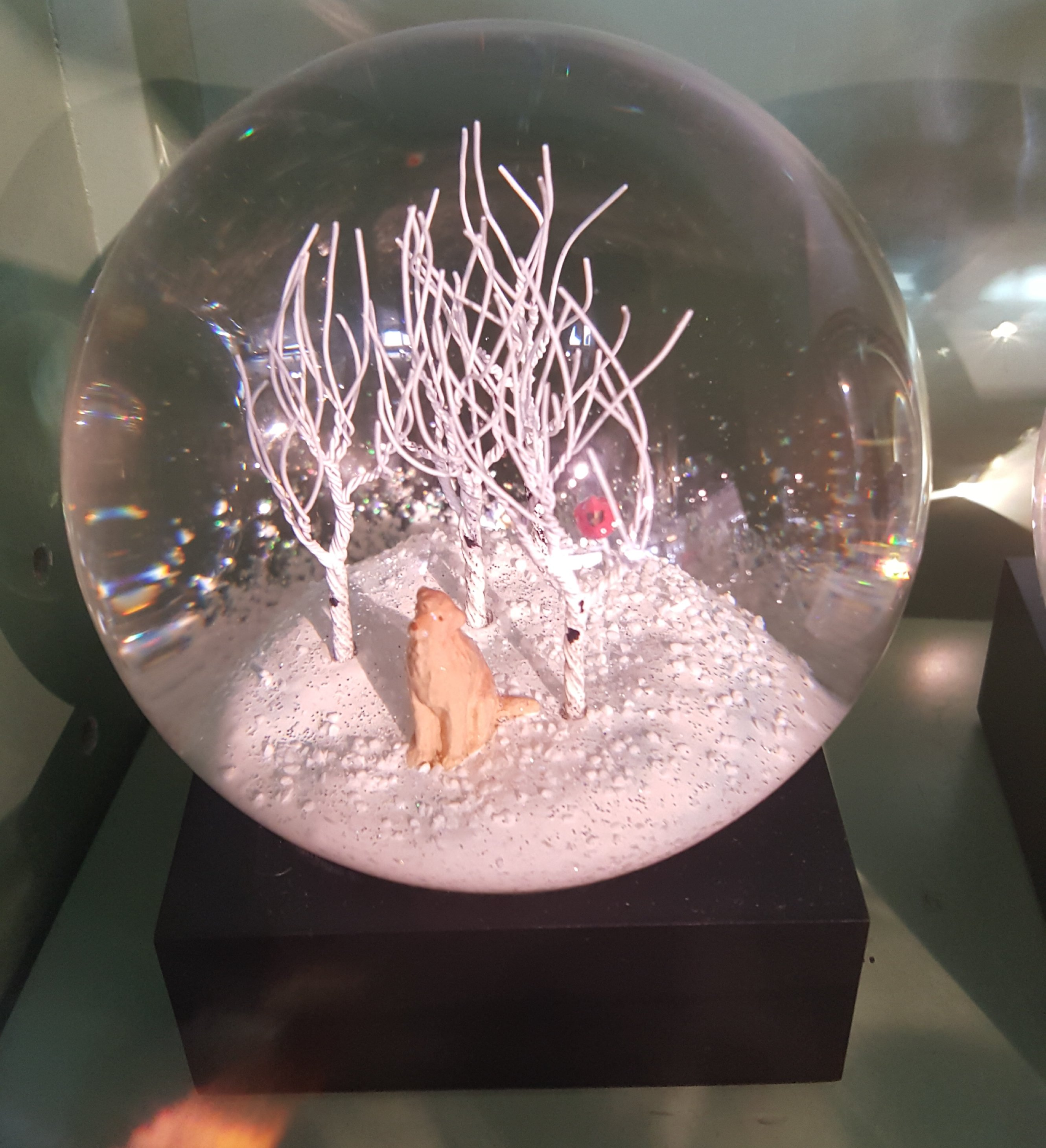 Cool Snow Globes Collections Maui